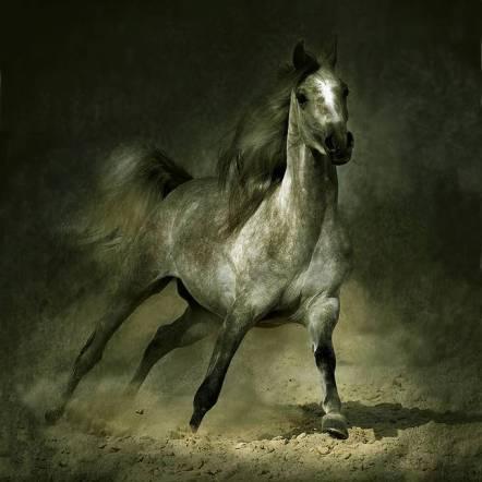 polvo caballo