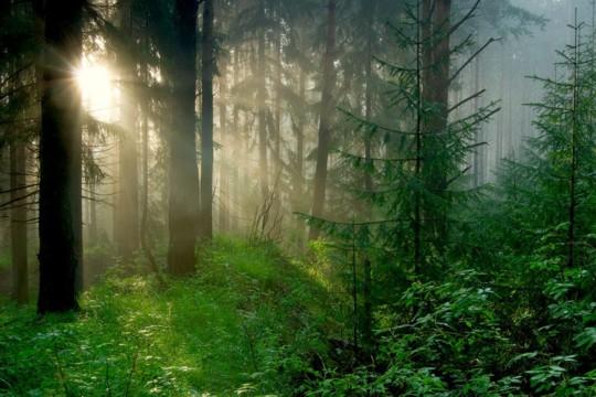 rencontre femme d un soir forest