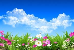 ece55-flores-de-primavera-spring-flowers-landscapes-paisajes-g