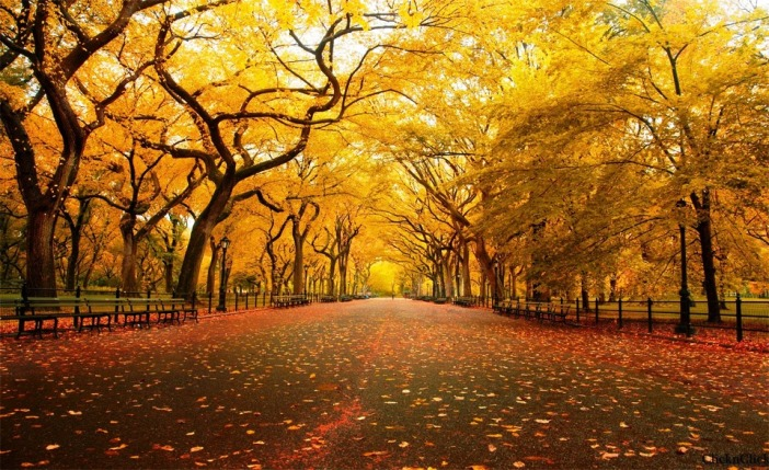 autumn-in-central-park