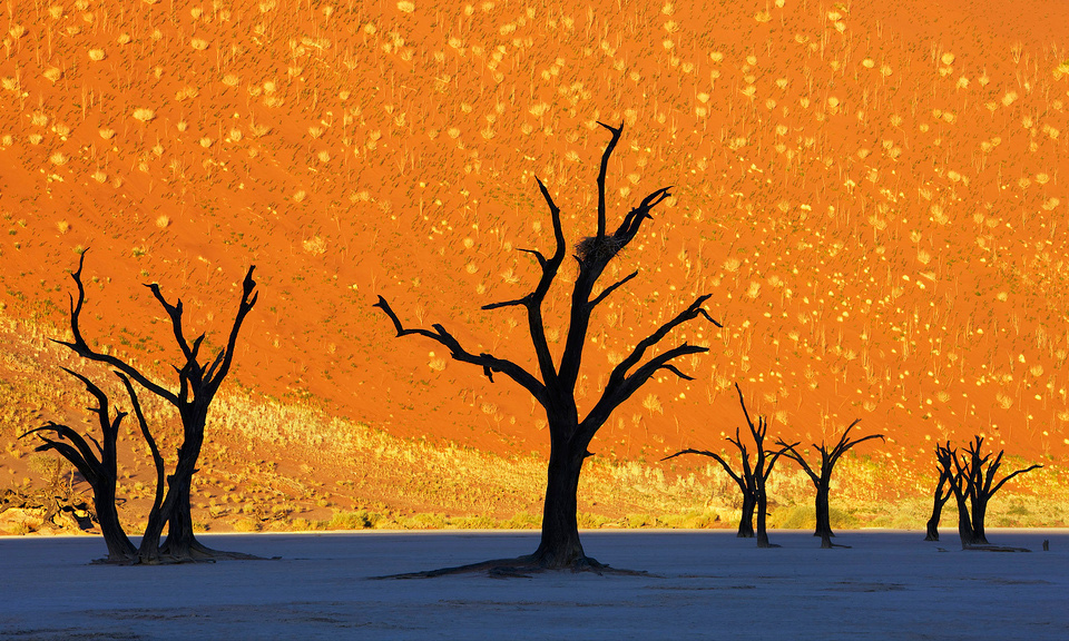 this-is-not-a-painting-dead-trees-park-namibia