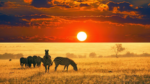 zebras-in-sunset-beautiful-landscape-photography-wallpaper