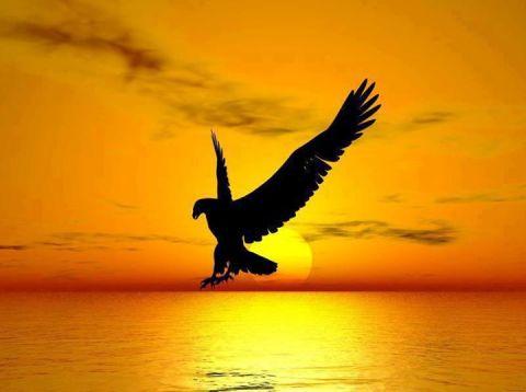 Ave-descendiendo-en-la-puesta-del-sol-hermoso