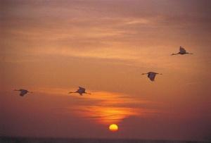mirad las aves del cielo 2