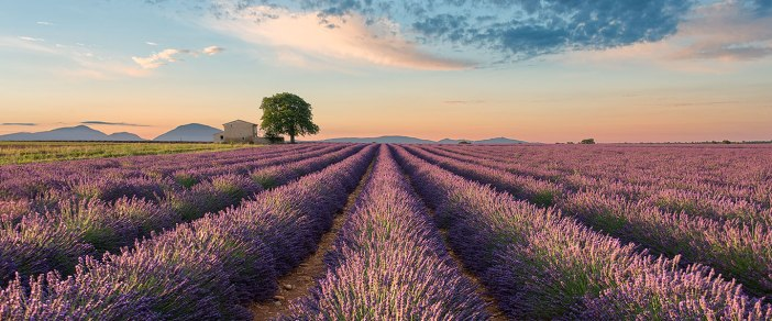 Colors of Valensole || France