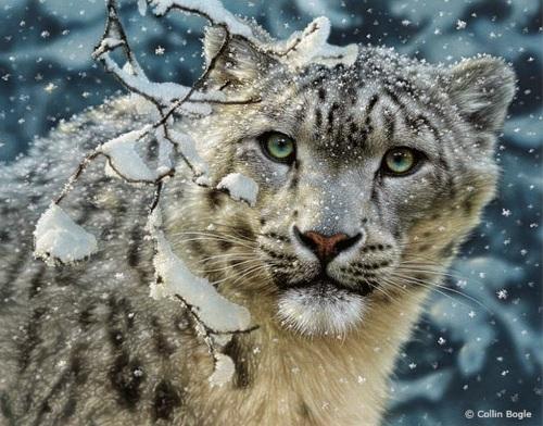 nieve yanimal salvaje mirando