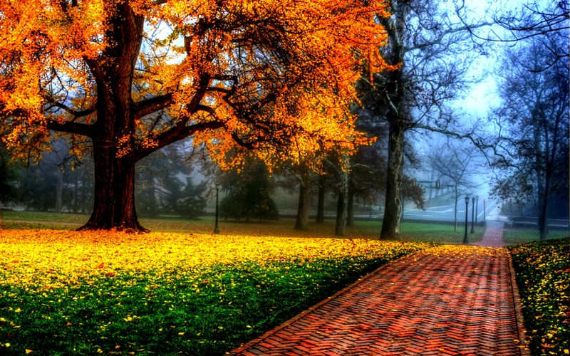 clouds landscapes nature trees colorful seasons brilliant parks 1680x1050 wallpaper_www.wallpaperhi.com_24
