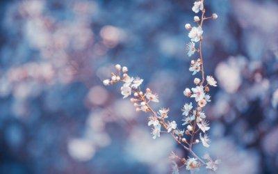flor azules