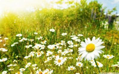 luz primavera.jpg