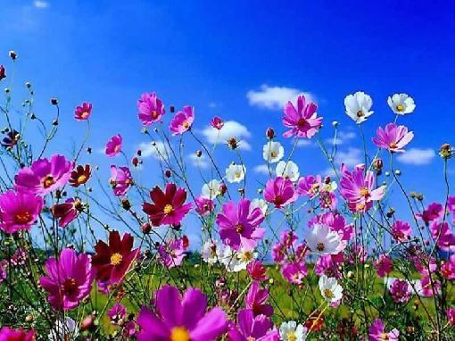 fotos-de-flores-de-primavera