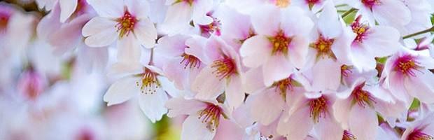 primaveral.jpg