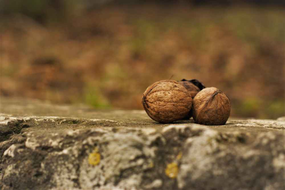 close up photography of nuts on ground
